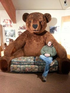 Bear Couch