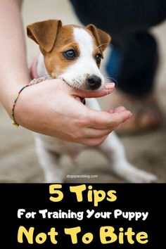 How To Potty Train Your Puppy… #dogtraining Police Dog Training, Therapy Dog Training, Service Dog Training, Agility Training For Dogs, Training Your Puppy, Therapy Dogs, Leash Training, Crate Training, Dog Agility