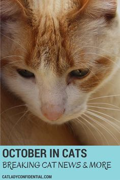 Cat news, funny videos and much more
