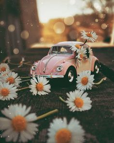 Summer Backgrounds, Cute Wallpaper Backgrounds, Pretty Wallpapers, Aesthetic Iphone Wallpaper, Flower Wallpaper, Aesthetic Wallpapers, Background Images Wallpapers, Simple Wallpapers, Beautiful Wallpaper