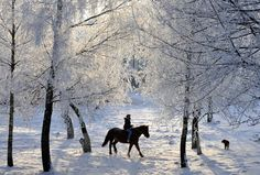 A woman rides in a forest in Smilovichi, Belarus, December 15, 2010. (Photo by Viktor Drachev/AFP Photo)