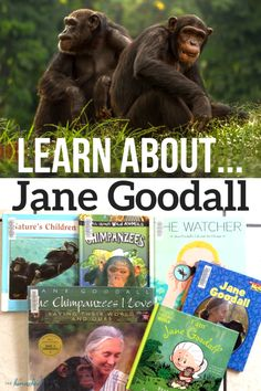 Jane Goodall lesson plans for elementary unit study. Learn all about the amazing life and studies of Jane Goodall, Primatologist. Jane Goodall, Kindergarten Activities, Science Activities, Science Resources, Preschool, Homeschool Curriculum Reviews, Homeschooling, Geography For Kids, Unit Studies