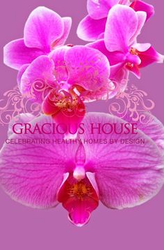 Gracious House, Chicago Radiant Orchid.