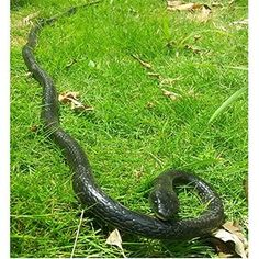 """Rubber Lifelike Snakes Scary Gag Gift Incredible Creatures Chain Snakes 50"""" Rain Forest Snake Toys Wild Life Snakes"""