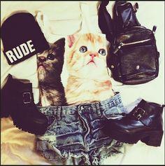 kitties, shoes, hat, backpack