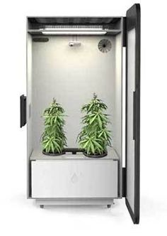 """The """"Plug N' Plant"""" Box that grows weed! I feel like these idea's are so great, but the company's behind them always rob you. Always check out alternative options! Plant Box, Grow Room, Grow Tent, Marijuana Plants, Living Room Interior, Herbs, Medical Marijuana, Cocktails, Hemp"""