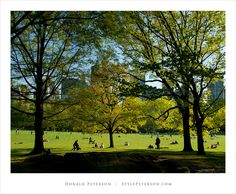 The Great Lawn, Central Park, New York City
