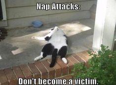funny, funny cats, cat, funny pictures, funny photos, IT'S CATURDAY! 20 Awesomely Funny Cat Photos
