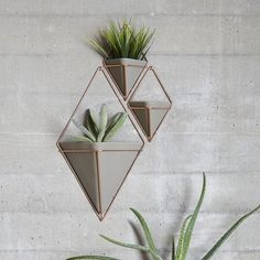 Trigg Multi-Functional Wall Vessel
