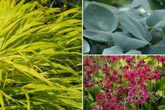 10 plantes vivaces d'ombre pour composer un massif - Promesse de Fleurs Geranium Vivace, Plantation, Herbs, Plants, Coins, Inspiration, Deco, Garden, Shade Garden Plants
