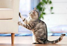 被貓抓壞家具有解!「貓咪壁貼」讓喵星人罰站懺悔ing Uses For Vicks, Furniture Scratches, Vicks Vaporub, Pet News, Cat Scratching, Cats, Animals, This Or That Questions, Gatos