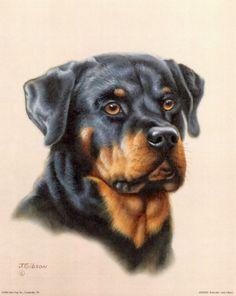 Rottweiler 2