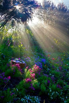 "you could think at the movie ""the secret garden"", it could posted right out of it, but this is the beauty of nature, not a fantasy; Sunbeams in the forest. Nature Living, All Nature, Amazing Nature, Autumn Nature, Amazing Grace, Amazing Art, Beautiful World, Beautiful Gardens, Beautiful Places"
