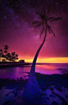 Palmera, alcanzando las estrellas   Fotografía de © Yves Rubin. Publicado por…