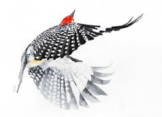 ARTFINDER:  Flying woodpecker -Original watercol... by Karolina Kijak -  Original watercolors of flying woodpecker ,  High quality pigments and paper Paper 300g size 30x42cm  Follow me on facebook: https://www.facebook.com/k...