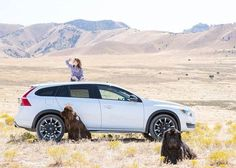 Find everything you're looking for. #V60 #osteenvolvo