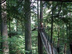 treetop_adventure_bridges_at_capilano_suspension_bridge_park.jpg (1459×1094)