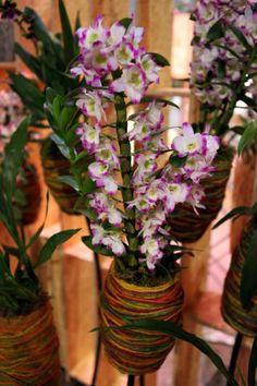 Orchidee in een wollen jasje