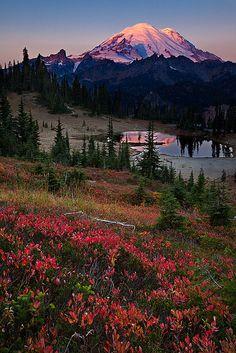 A Touch of Fall | Chinook Pass,Washington State