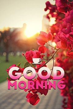 Good Morning Friends Images, Romantic Good Morning Messages, Good Morning Nature, Latest Good Morning Images, Good Morning Beautiful Images, Good Morning Msg, Good Morning Flowers, Good Morning Greetings, Morning Pictures