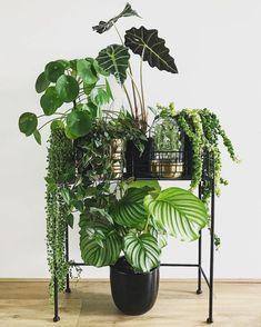 22 Amazing Indoor Jungle - fancydecors