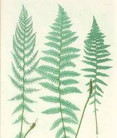 В Гелос - Антикварные Печати & Карта Галерея - Ботаники