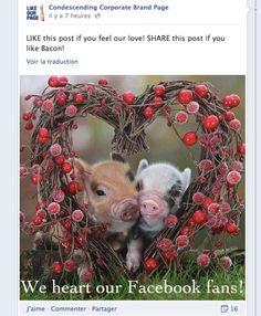 Ce qu'il ne faut pas faire sur sa Page Facebook