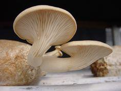 Cogumelos!