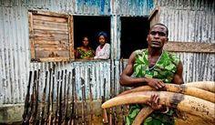 WildLeaks : Sitio web para denunciar cazadores furtivos
