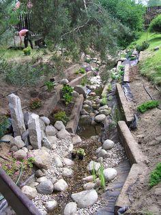 Ogród Tamaryszka: STRUMYK