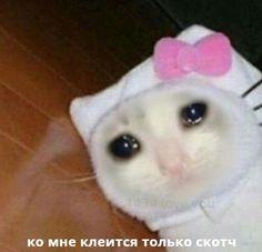 Sad Cat Meme, Funny Cat Memes, Funny Cats, Crying Meme, Cat Crying, Cute Animal Memes, Funny Animals, Cute Animals, Gatos Cool
