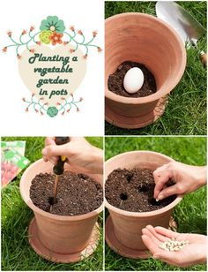 Planting-a-vegetable