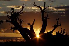 Moab Sunrise by landon johnson on 500px #sunrise #moab #Utah