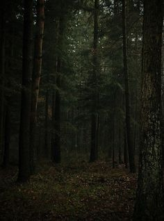 Image shared by lupercale_. Find images and videos about nature, dark and tree on We Heart It - the app to get lost in what you love.