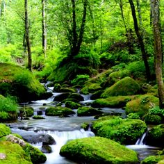 April 29...The peacefulness and serenity of a mountain stream is mothers natures place to cleanse purify and renew our water resources. It is also a great place to go to relax, clear our minds and refresh our soul.