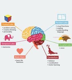 how does our brain works? Visit us on goimprovememory.com Via google images #memory #memorys #memorylane #memorybox #memoryfoam #memories #memoryloss #improvememory #memoryday #memoryhelp #memorybook