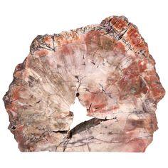 Kristen Buckingham | Beauty Is Everywhere: Petrified Wood decorative object