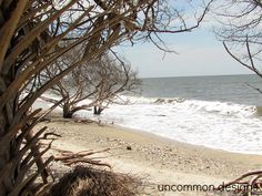 Botany Bay at Edisto Island on the South Carolina coast. Absolutely Gorgeous!
