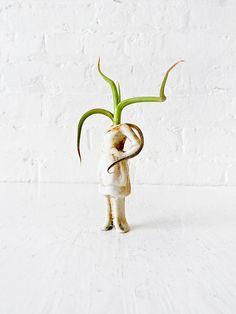 air plant in vintage figurine