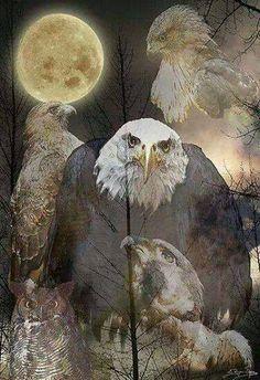 . Raptor Bird Of Prey, Birds Of Prey, Eagle Drawing, Eagle Art, Raptors, Wildlife Photography, Bald Eagle, Owl, Hawks