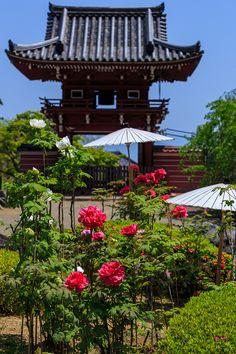 當麻寺・奥院の牡丹たち : 花景色-K.W.C. PhotoBlog