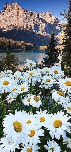 Emerald lake, British Columbia, Canada #by  swetsngr on flickr.com