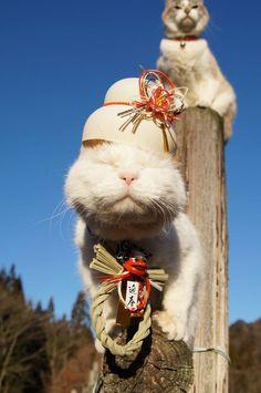 New Year Cat in Japan Japanese Cat, Neko, Cute Cats, Snowman, Teddy Bear, Kitty, Cool Stuff, Beauty, Animals