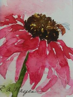 PINK CONEFLOWER WILDFLOWER MINIATURE WATERCOLOR #bird of paradise