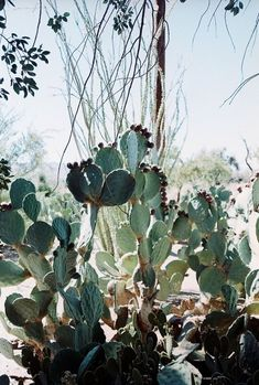Wild Cactus Gardens / Wedding Style Inspiration / LANE (instagram: the_lane)