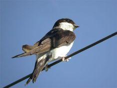 Welcher Vogel ist das? Vogelstimmen erkennen!   Duda.news Montessori, Bird, Star, Animals, House Martin, Chaffinch, Robin, Kinds Of Birds, Animales
