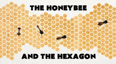 'The Honeybee and the Hexagon', A TED-Ed Animation About Why Bees Make Hives Using Hexagonal Shapes #honeycomb