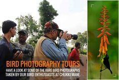 Bird Photography Tours - Lot of people provide you with these tours but what makes us different is the level of enthusiasm from our guides  who have extensive knowledge and enjoy sharing their knowledge with you. Have a look at some of the rare bird photographs taken by our bird enthusiasts at Chukki Mane. ‪#‎birdphotography‬, ‪#‎ChukkiMane‬, ‪#‎photographytour‬