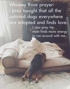 Interesting Beagle Friendly Loyal And Loving Ideas. Glorious Beagle Friendly Loyal And Loving Ideas. Baby Beagle, Beagle Puppy, Cute Puppies, Cute Dogs, Dogs And Puppies, Doggies, I Love Dogs, Puppy Love, Adoptable Beagle
