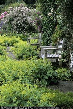 Helen R. will love to see Benches in a wild Garden. I think it's perfect for resting in the garden.....and planning....and napping.....